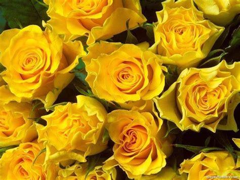 i fiori e il loro significato fiori significato significato fiori fiori cosa significano