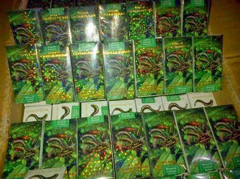 Minyak Lintah Herbal Alam jual obat herbal minyak lintah dayak minyak lintah asli