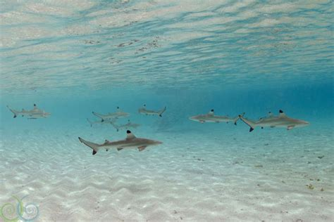 baby shark bahasa indonesia dive deals dive discovery hot news page 3