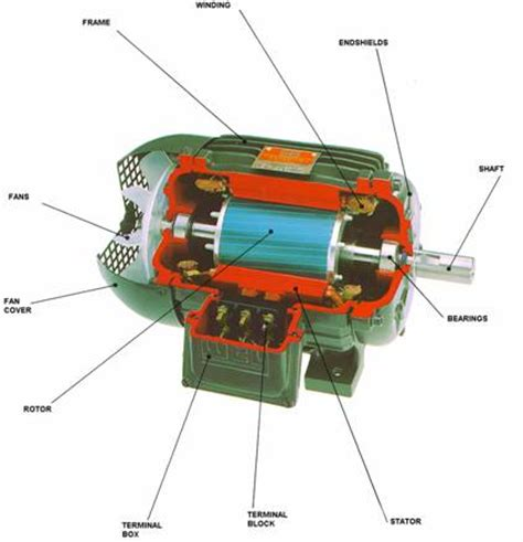 squirrel cage motor advantages ac motors
