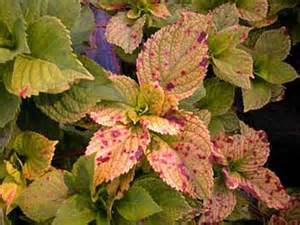 A Plant Disease - plant fungus and diseases