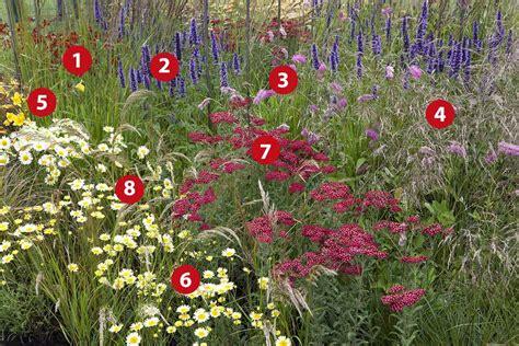 Vaste Planten Border Beplantingsplan by Natuurlijke Border Beplantingsplan
