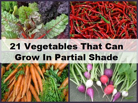 what garden vegetables like shade 21 vegetables that can grow in partial shade