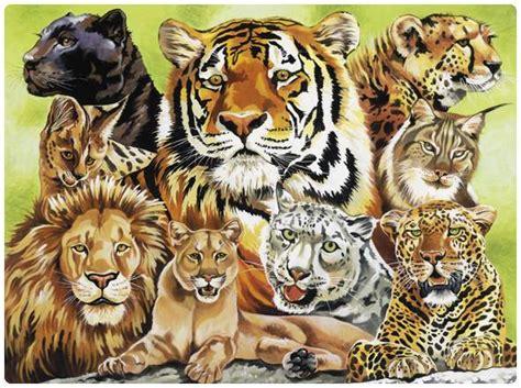 imagenes de leones y gatos felinos