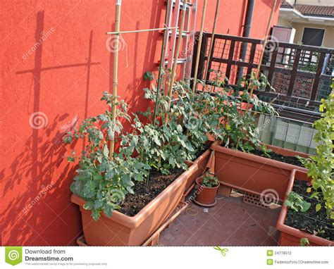 Tomaten Auf Dem Balkon 5347 by Tomato Plants Grown In A Balcony Stock Photography Image