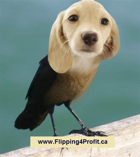 puppy realty how to find bird dogs