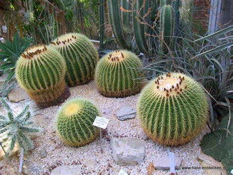 halle botanischer garten botanischer garten in halle saale www halle entdecken de