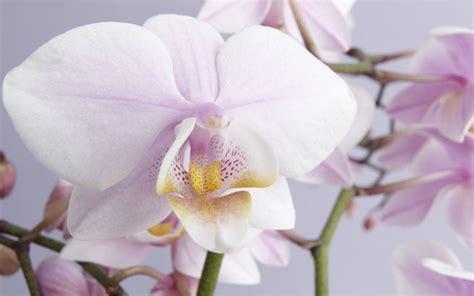 Wie Pflegt Orchideen Richtig 4793 by Wie Sie Orchideen Richtig Pflegen