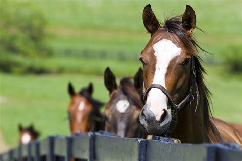 lettiere per cavalli lettiere di lolla di riso per cavalli cieffe s r l