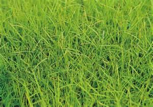農友種苗 東南亞 有限公司 known you seeds distribution s e a pte ltd grass seeds