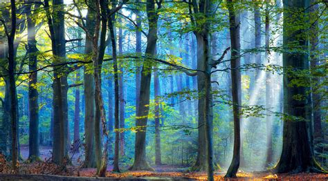 Ikea Products the enchanted forest iii lars van de goor