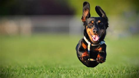 high energy dogs surprisingly effective ways to handle high energy dogs