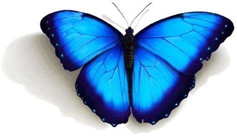 imagenes mariposas turquesas mariposas turquesas imagui