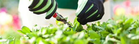 green house to buy best greenhouse buy sydney garden products
