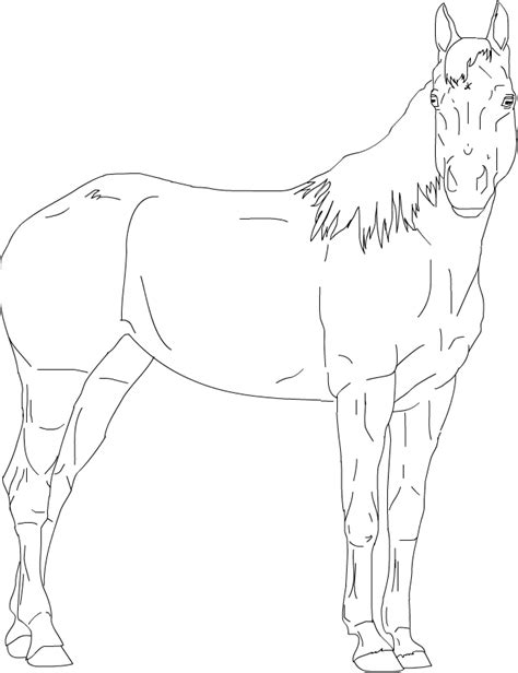 coloring pages of quarter horses best photos of quarter horse outline standing horse