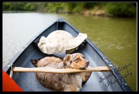 canoeing with dogs wanted a canoe message boards