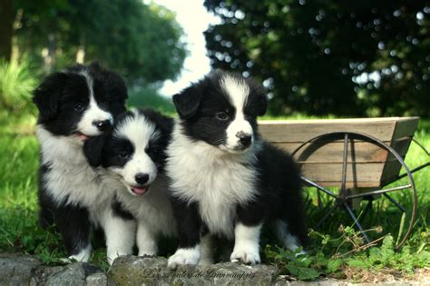 medium size dogs top 10 medium sized dogs for your family