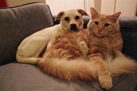 cats on couch why cats are better than dogs business insider