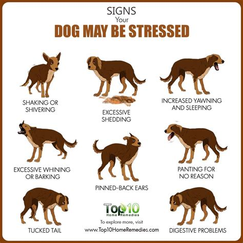 signs of stress in dogs top 10 signs your may be stressed top 10 home remedies