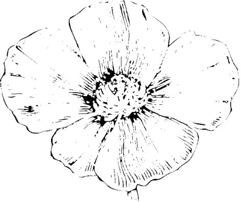 California Poppy Coloring Page california poppy coloring page coloring pages