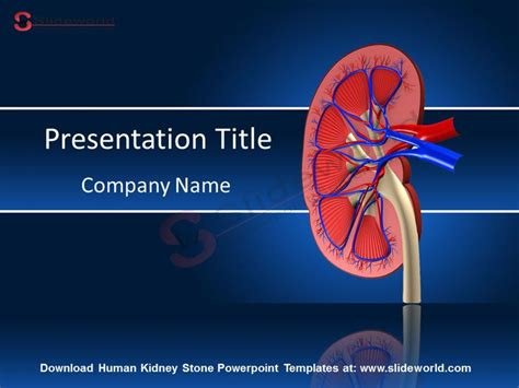 68 Best Images About Medical Powerpoint Presentations On Pinterest Kidney Transplantation Disease Powerpoint Template