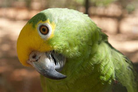 imagenes de animales y plantas de brasil flora y fauna de brasil