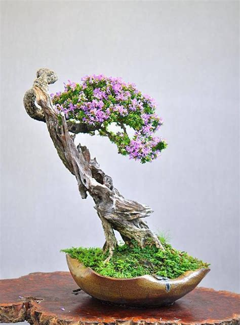 bonsai plants pictures indoor bonsai tree indoor bonsai