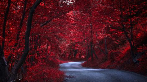 photo red nature autumn roads trees