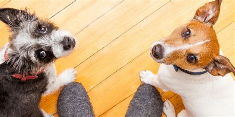 pros and cons of getting two puppies hill s pet