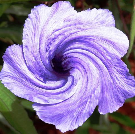 Paintings For Home Decor by Purple Petunia Twirl Photograph By Belinda Lee