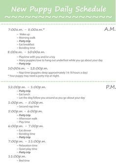 goldendoodle puppy feeding schedule 1000 ideas about puppy schedule on puppy