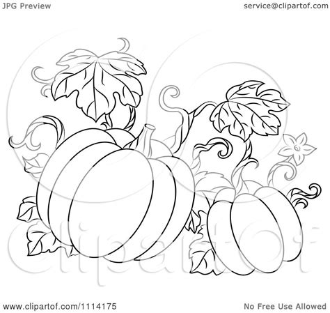 coloring pages of pumpkin vines clipart outlined pumpkin vine royalty free vector