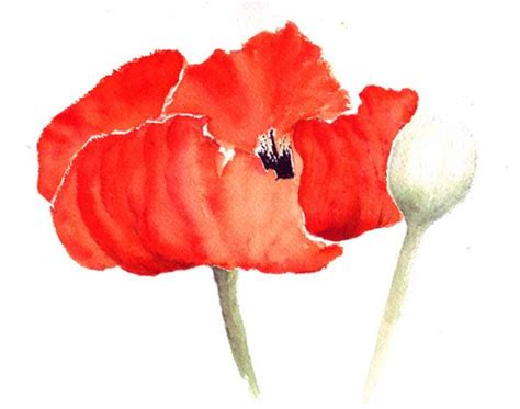 google images poppies 305 best images about tattoo inspirations on pinterest