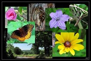 Public domain nature photos