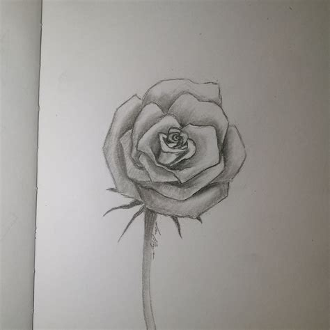 drawing a rose dezigningart com