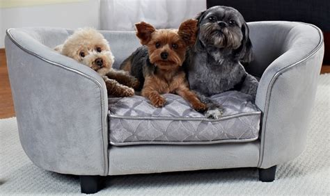 couch potato dogs best couch potato dog 28 images best breeds for couch
