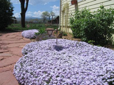 ground covers for shade garden ideas quot