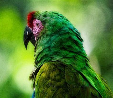 Imagenes Animales Que Respiran Por Los Pulmones | animales que respiran por los pulmones comorespiran com