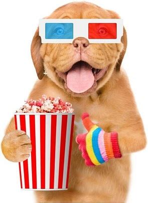 can dogs eat caramel can dogs eat popcorn without any problems lovepetjournal