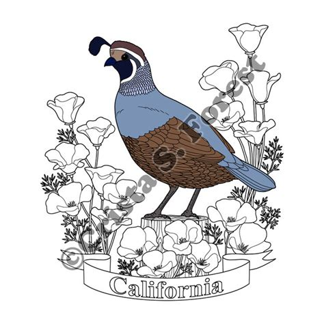california state color crista forest s animals california state bird and
