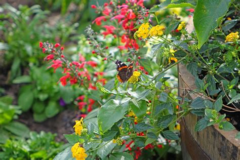 Butterfly Flower Garden Flower Garden With Butterflies Butterfly Flower Garden