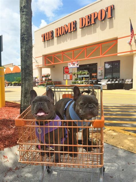 stores that allow dogs 6 friendly stores that allow dogs