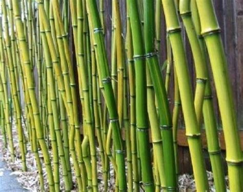 Bamboo Garden Atlanta by 90 Best Images About Plants On Cardboard Rolls