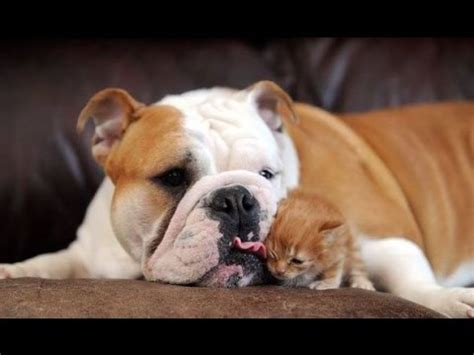 puppies with kittens big dogs with kittens compilation with cats