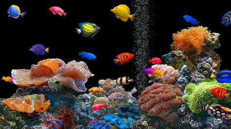 best fish screensaver tropical fish screensaver