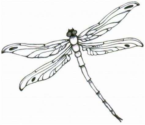delicate dragonfly clipart clipground