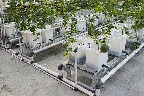 Jual Alat Hidroponik Bali arini bali farm hidroponik sistem tetes