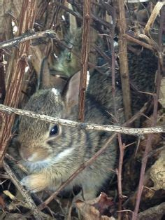 baby bunnies in my backyard 1000 images about baby bunnys on pinterest baby bunnies