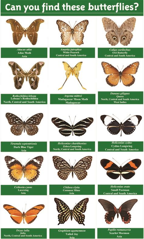breeds species butterfly species and names pictures to pin on pinsdaddy