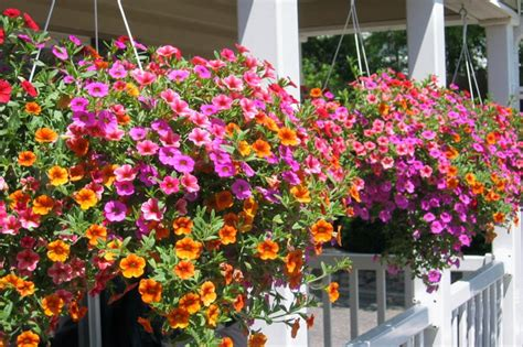 Hanging Plants For Patio by Hanging Baskets For Outdoor Decor With Images